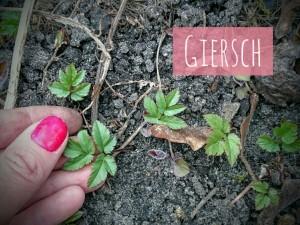GierschKleinMärz2016
