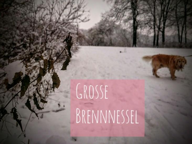 GrosseBrennnessel-2015