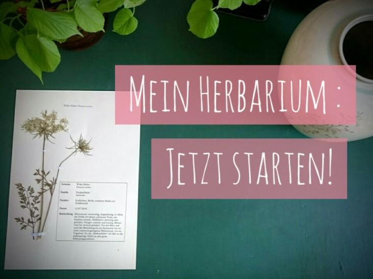 HerbariumAnneHecker (1)