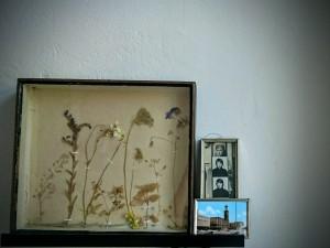HerbariumAnneHecker (2)