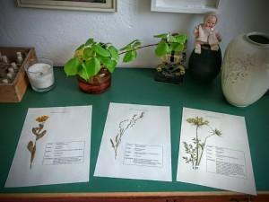 HerbariumAnneHecker (3)