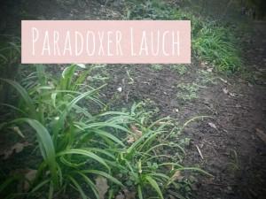 ParadoxerLauchGörlitzerPark