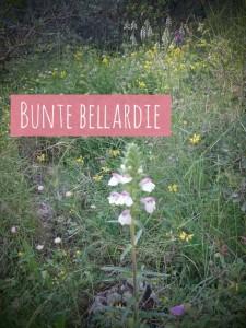 BunteBellardieHvar