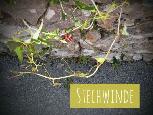 StechwindeHvar