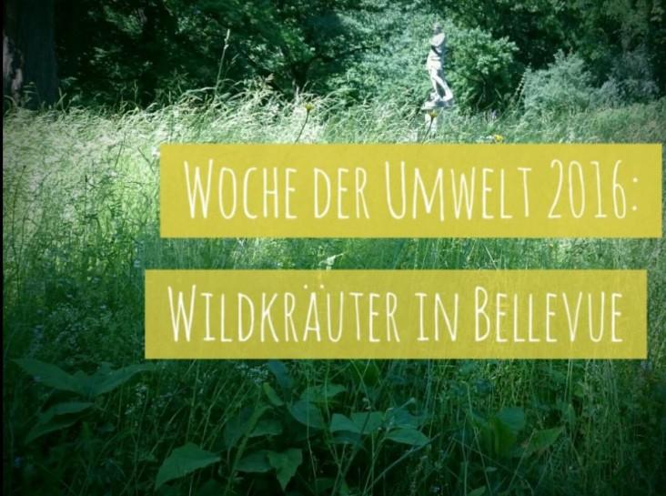 WildkräuterinSchlossBellevue